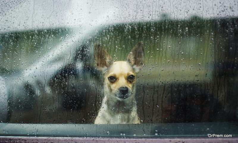 dog locked inside the car